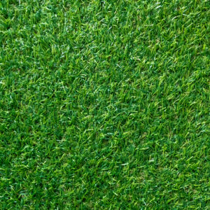Green grass texture for background. Green lawn pattern and texture background. top view.